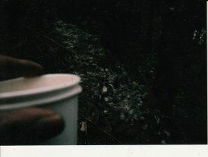 毛 コーヒー